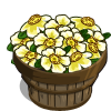 Cherokee Rose Bushel-icon