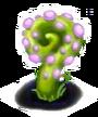 Planta Caracol roxo