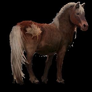 Wild - Sable Island Pony