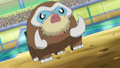 EP753 Mamoswine de Dawn en la copa junior