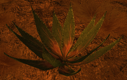 Thornstinger Plant Node