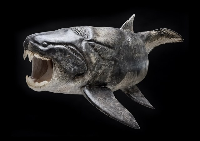 D4sign: Real-Life Monsters: Dunkleosteus
