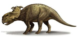 PachyrhinosaurusSK
