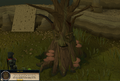 Healing the Spirit Tree.png