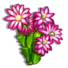 Holiday Cactus-icon