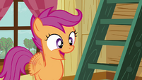 Scootaloo &#39;Really&#39; S3E06