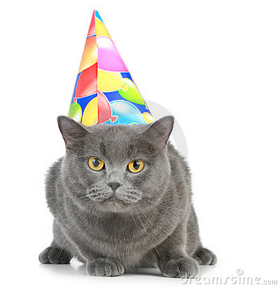 Party Hat Kittens - S.S. Snark Wiki