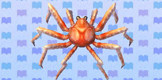 external image Giant_Spider_Crab.jpg