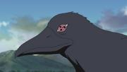[Petición] Cuervos - Karasu 180px-Cuervo_de_Itachi_en_el_anime