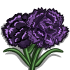 Black Carnation-icon