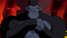 Grodd