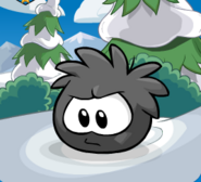 Black Puffle Trans