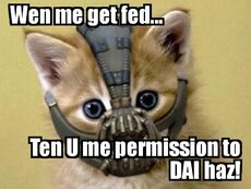 Lolcat-Bane