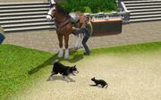 Pets In TS3