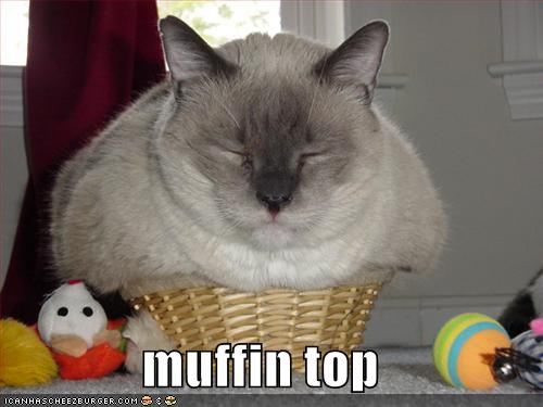 Funny Pictures Fat Cat Basket Cats