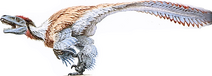 Dromaeosaurus