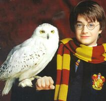 Harry-Potter-Hedwig