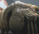 Facehugger