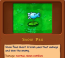 Snow Pea