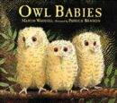 Owl Babies