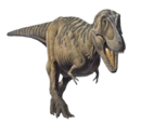 Tarbosaurus