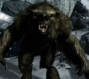 Werebear (Dragonborn)