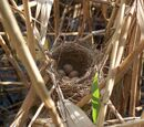 Bird nest