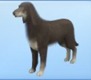 List of pet breeds