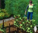 Gardening (The Sims 3)
