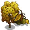 Bitternut Hickory Tree-icon.png