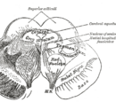 Ventral tegmental area