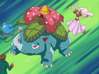 Venusaur de May/Aura