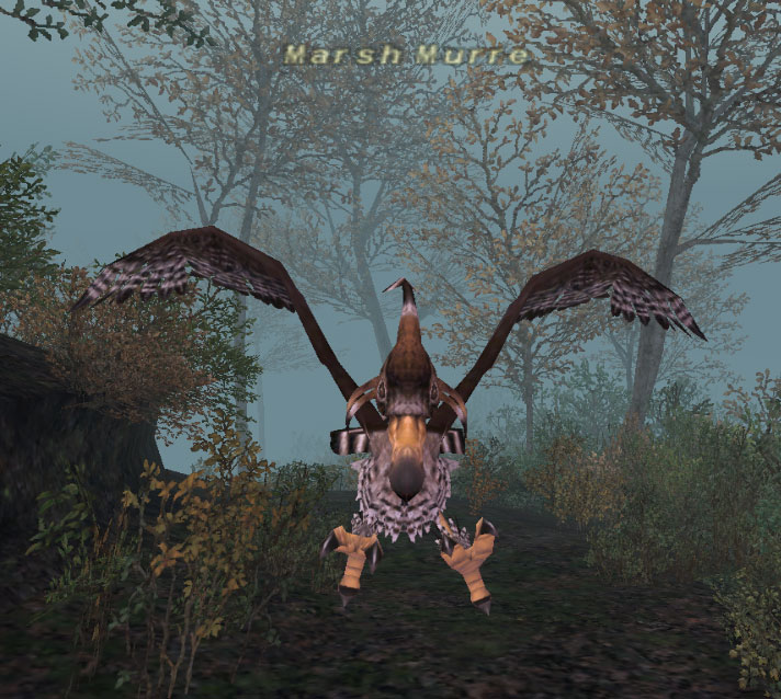 http://images2.wikia.nocookie.net/ffxi/images/1/17/Marsh_Murre.jpg
