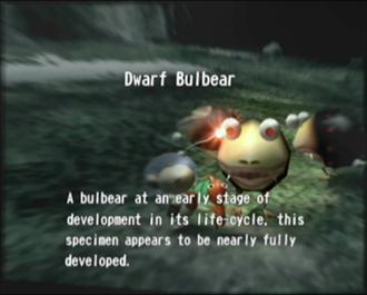 Reel6_Dwarf_Bulbear.png