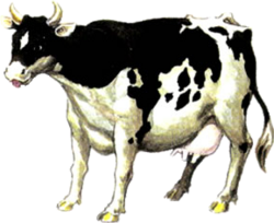 250px-Cow_Artwork_%28Ocarina_of_Time%29.png