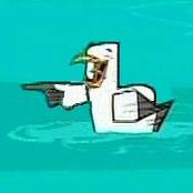 Laughing_gull.jpg