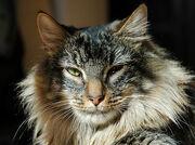 180px-Cat_Mandu.jpg