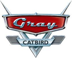250px-Gray_catbird_cars.jpg